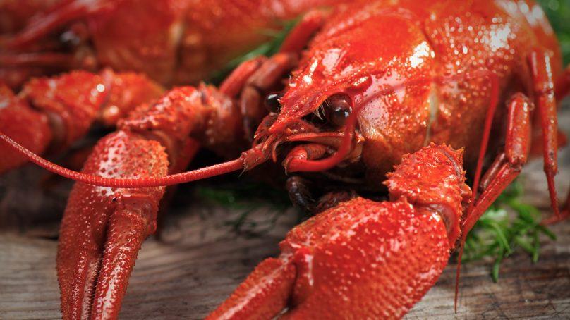 Hawke's Bay Man sentenced for selling Crayfish on Black-Market